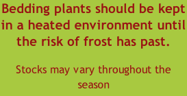 Bedding plants should be kept in a heated environment until the risk of frost has past.  Stocks may vary throughout the season